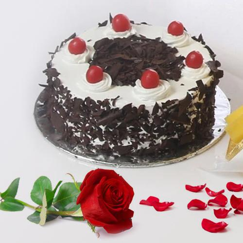 Delectable Black Forest cake with a bright Red Rose