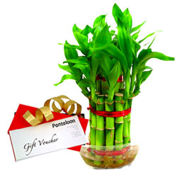 Attractive Bamboo Plant and Pantaloons Gift Voucher