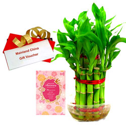 Combo Selection of Bamboo Plant with Anniversary Card and Mainland China Voucher
