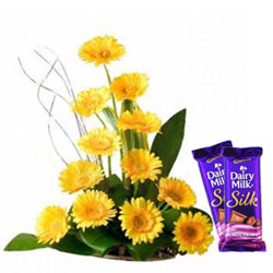 Delicious Cadbury Silk with Colorful Gerberas Arrangement