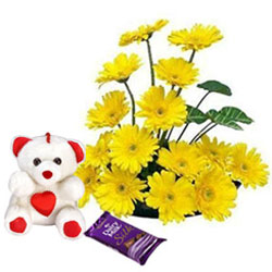 Attractive Arrangement of Yellow Gerberas with Teddy N Dairy Milk Silk