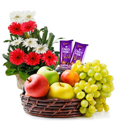 Aromatic Gerberas Arrangement with Mixed Fruits Basket and Sweet Dairy Milk Silk