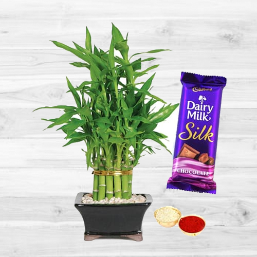 Combo of Silk N 2 Tier Bamboo Plant