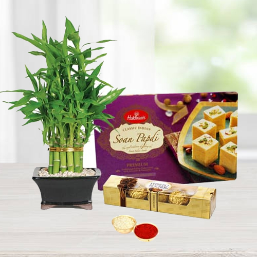 Ferrero Rocher Chocolates with Soan Papdi N Bamboo Plant