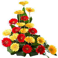 Arrangement of Multi-Hued Gerberas