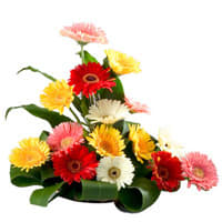 Perfect Assorted Gerberas Arrangement