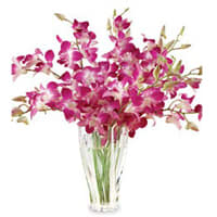 Wonderful Orchids Arranged in a Glass Vase