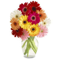 Classic Arrangement of Gerberas in a Big Vase