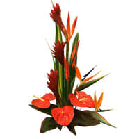 Online Arrangement of Birds of Paradise and Anthuriums