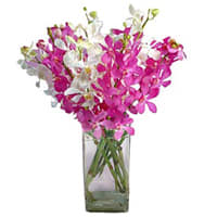 Elegant Display of Orchids in Vase