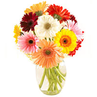 Stunning Mixed Gerberas in a Glass Vase