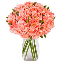 Awesome Pink Carnations in a Vase