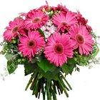 Spiffy Bunch of Pink Gerberas