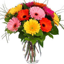 Colorful Gerberas in Glass Vase