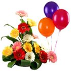 Dazzling Mixed Gerberas Bouquet with Balloons