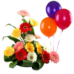 Awesome Arrangement of Mixed Gerberas N Balloons