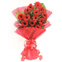 Wonderful Red Gerberas Bunch