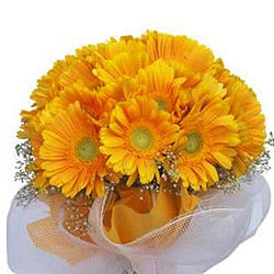 Radiant Bunch of Yellow Gerberas