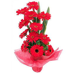 Vibrant Red Gerberas Arrangement