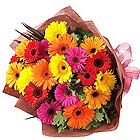 Pristine Assemble of Fifteen Assorted Gerberas