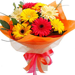 Charming Mixed Gerberas Bunch