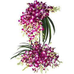 Ornamental 30 Orchid Stems Tall Arrangement