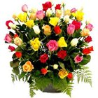 Pure passion Basket of Mixed Coloured Roses