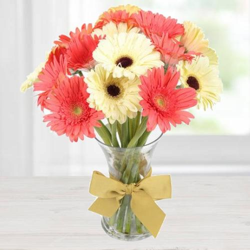 Gift of Pink N White Gerberas in a Vase