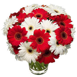 Gift of Gerberas in a Glass Vase