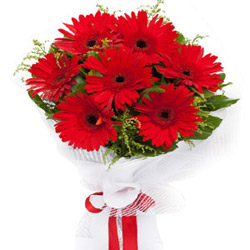 Lovely Red Gerberas Bouquet