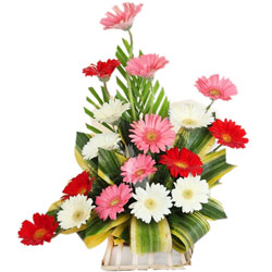 Lovely Arrangement of Assorted Gerberas