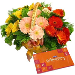 Colorful Gerberas Basket N Cadbury Celebrations Pack