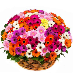 Special Basket of Colorful Gerberas