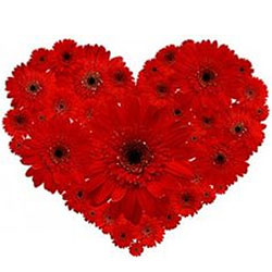 Special Arrangement of Gerberas in Heart-Shape