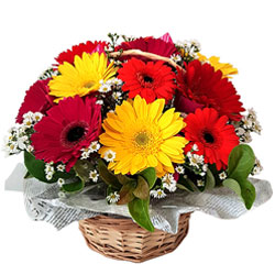 Bright Basket of Assorted Gerberas