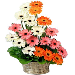 Breathtaking Arrangement of Assorted Gerberas Basket