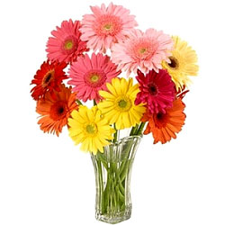 Aromatic Gerberas in Glass Vase