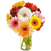 Colorful assemble of Gerberas in a Glass Vase