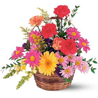 Majestic Basket Display of Gerberas nd Carnations