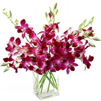 Delightful Orchids Displayed in a Glass Vase