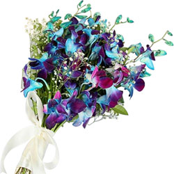 Striking Bouquet of Blue Orchids