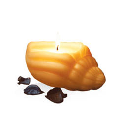 Marvelous IRIS Sea Shell Candle with Vanilla Fragrance