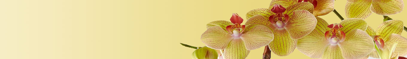 Orchids Delivery in India