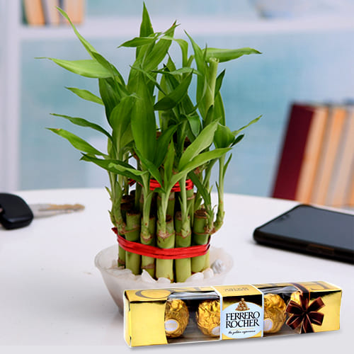 Blooming Gift of 2 Layer Lucky Bamboo Stalks in Glass Pot with Ferrero Rocher