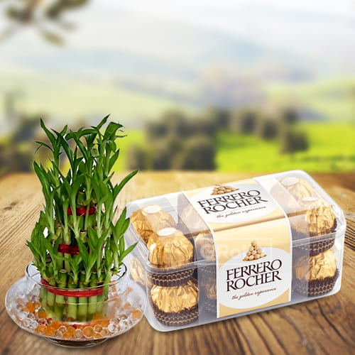 Feel Blessed 2 Tier Lucky Bamboo Plant in Glass Pot with Ferrero Rocher