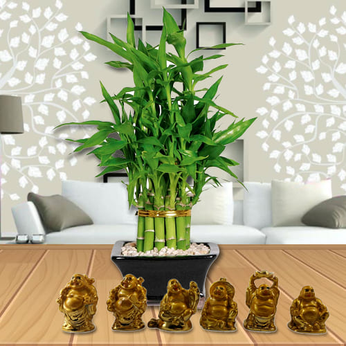 Two Layered Good Luck Bamboo Plant in Glass Pot with Laughing Buddha Idol Set