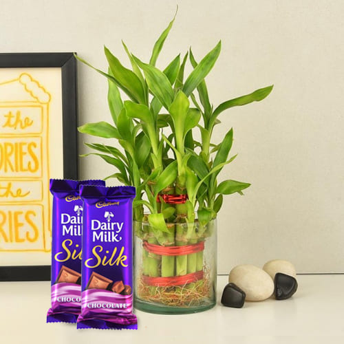 Blessed Two Layered Bamboo Plant in Glass Pot with Dairy Milk Silk