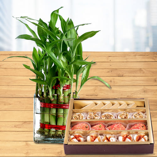 Two Layered Good Fortune Bamboo Plant in Glass Pot with Haldiram Sweets