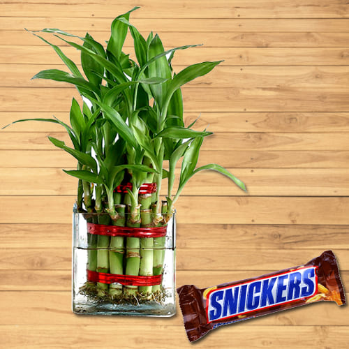 Good Luck 2 Tier Bamboo Plant with Chocolate Pack