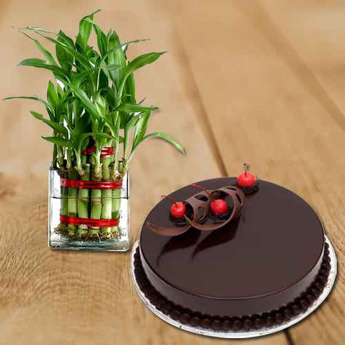 Two Layered Leafy Bamboo Plant in Glass Pot with Chocolate Flavor Cake